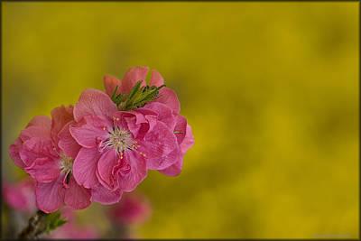 Photograph - Garden Blossoms by Erika Fawcett