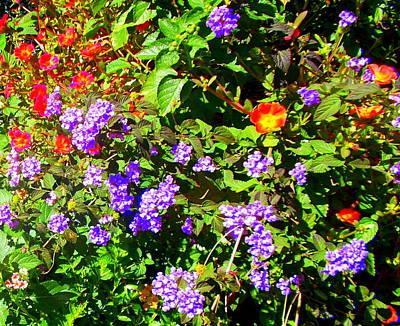 Photograph - Garden Bouquet by Pamela Hyde Wilson