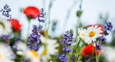 Photograph - Garden Bouquet by Patti Raine