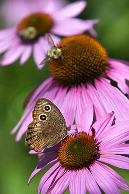 Garden Butterfly Print by Christina Rollo