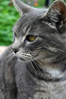 Photograph - Garden Cat by Michele Avanti