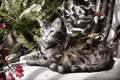 Digital Art - Garden Cat by Photographic Art by Russel Ray Photos