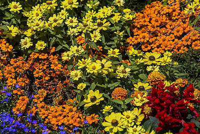 Flower Blooms Photograph - Garden Colors by Garry Gay