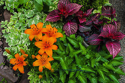 Art Print featuring the photograph Garden Colors by Phil Abrams