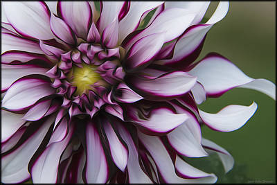 Photograph - Garden Dahlia by Erika Fawcett
