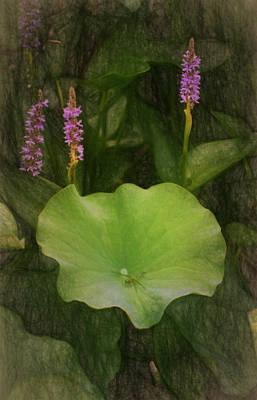Photograph - Garden Delight by Richard Rizzo