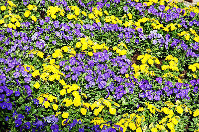 Outdoors Photograph - Garden Design by Aimee L Maher Photography and Art Visit ALMGallerydotcom