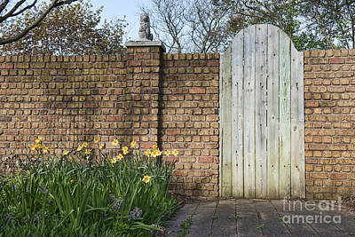 Photograph - Garden Door by David Arment
