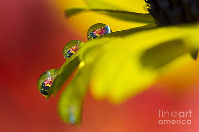 Photograph - Garden Drops by Sonya Lang