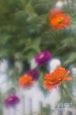 Photograph - Garden Fence - D009100 by Daniel Dempster