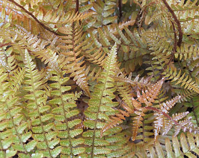 Photograph - Garden Fern Leaves by Duane McCullough