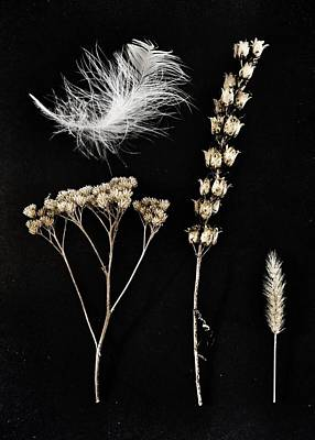 Photograph - Garden Finds by Marianna Mills