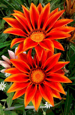 Garden Flowers Print by Diana Burlan