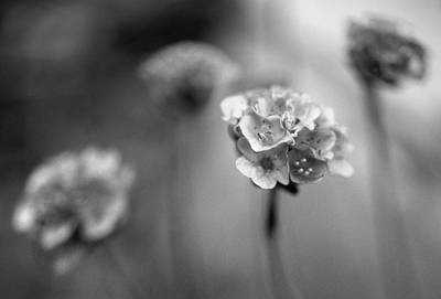 Photograph - Garden Flowers In Black And White by Jim Vance