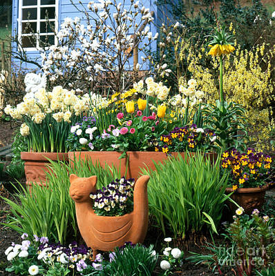 Garden Flowers In Containers Art Print by Hans Reinhard