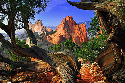 Colorado Springs Photograph - Garden Framed By Twisted Juniper Trees by John Hoffman