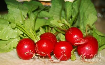 Photograph - Garden Fresh Radishes by Peggy Hughes