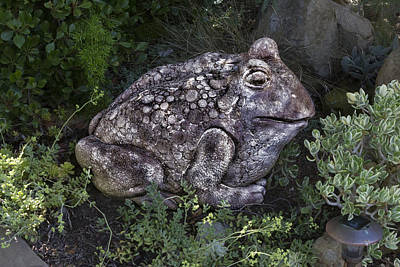 Digital Art - Garden Frog by Photographic Art by Russel Ray Photos