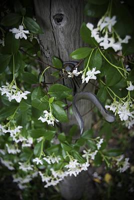 Photograph - Garden Gate by Judy Hall-Folde