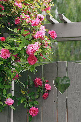 Garden Gate With Roses Growing Print by Jaynes Gallery