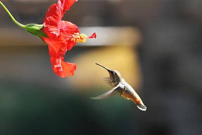 Hummingbird Photograph - Garden Glow by Lynn Bauer