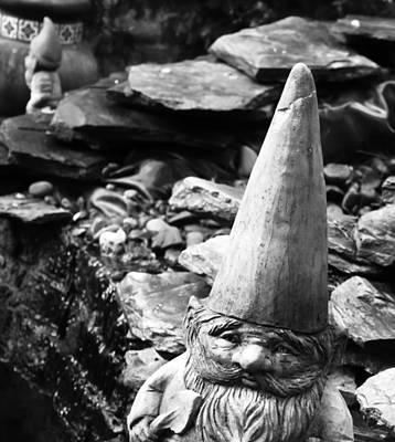 Photograph - Garden Gnome by Kara  Stewart