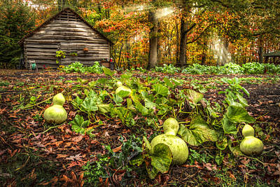 Garden Gourds Art Print