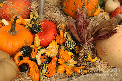 Photograph - Garden Harvest by Steven Parker