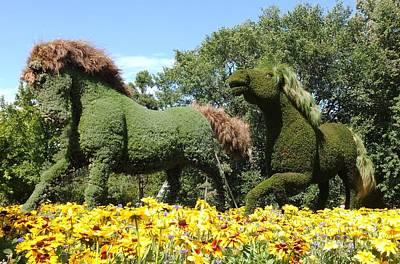 Photograph - Garden Horses  by Vicky Tarcau