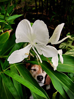 Photograph - Garden Hound by TK Goforth