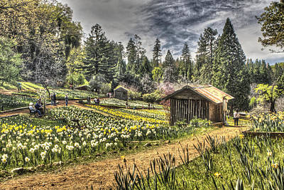 Photograph - Garden Houses On Daffodil Hill 2 by SC Heffner