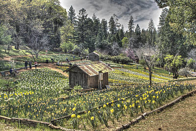 Photograph - Garden Houses On Daffodil Hill  by SC Heffner