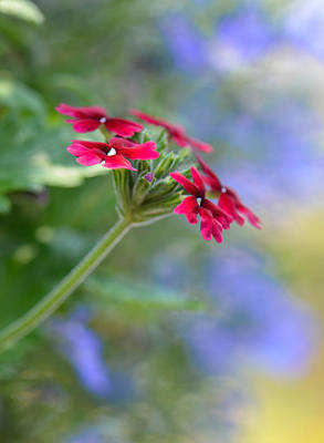 Photograph - Garden Impressionist by Amy Porter