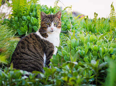 Photograph - Garden Kitty by Bill Pevlor