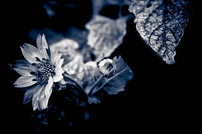 Garden Life  Original by Isabel Laurent