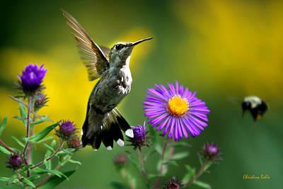 Hummingbird Photograph - Garden Lights by Christina Rollo