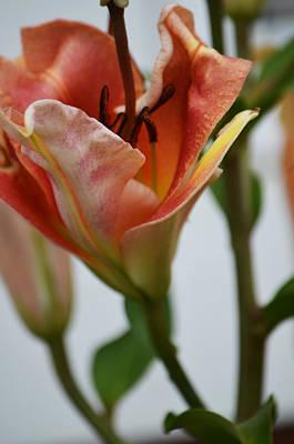 Photograph - Garden Lily by Deprise Brescia