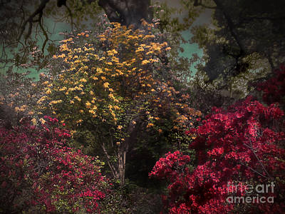 Photograph - Garden Of Eden by T Lowry Wilson