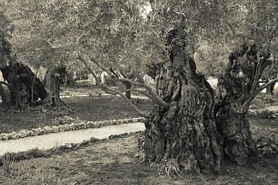 Garden Of Gethsemane, Mount Of Olives Art Print