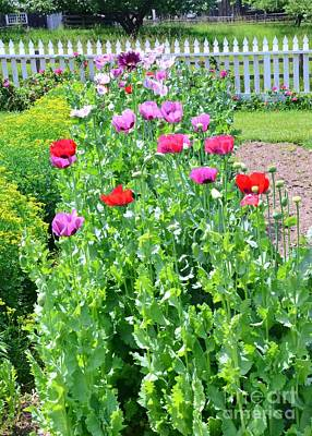 Garden Of Poppies Art Print
