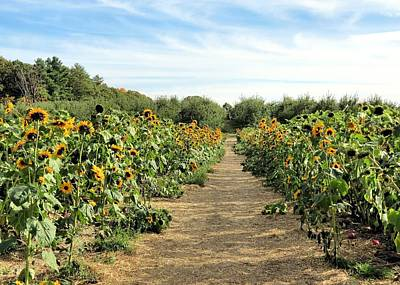 Photograph - Garden Of Sunflowers by Janice Drew