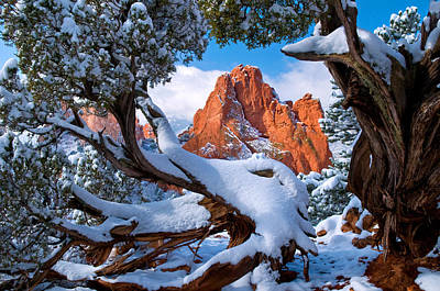 Garden Of The Gods Framed By Juniper Trees Art Print