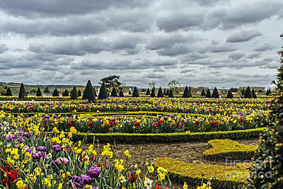 Photograph - Garden Of Versailles by Elvis Vaughn