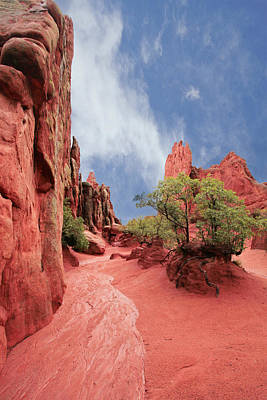 Garden Of The Gods Photograph - Garden Of Wonder by William Richhart