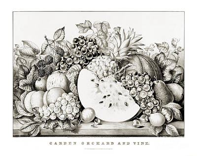 Garden Orchard And Vine - 1867 Art Print