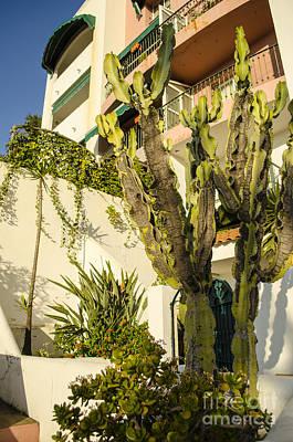 Photograph - Garden Patio Gibraltar by Deborah Smolinske