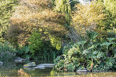 Photograph - Garden Pond by Kate Brown