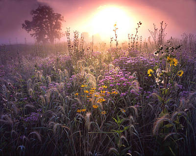 Photograph - Garden Prairie by Ray Mathis