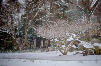 Photograph - Garden Scene During Winter Snow At Sayen Gardens 2 by Beth Sawickie