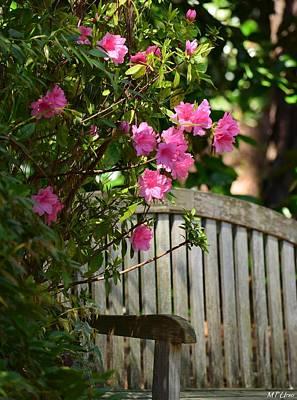 Photograph - Garden Seat by Maria Urso